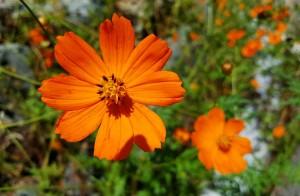 flores meditacion